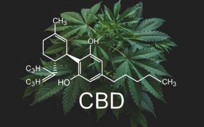 HEMPFINITY – All about CBD oil